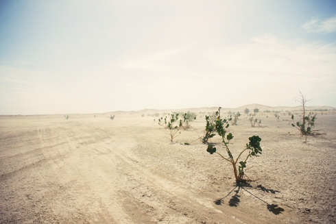 Sahara_07