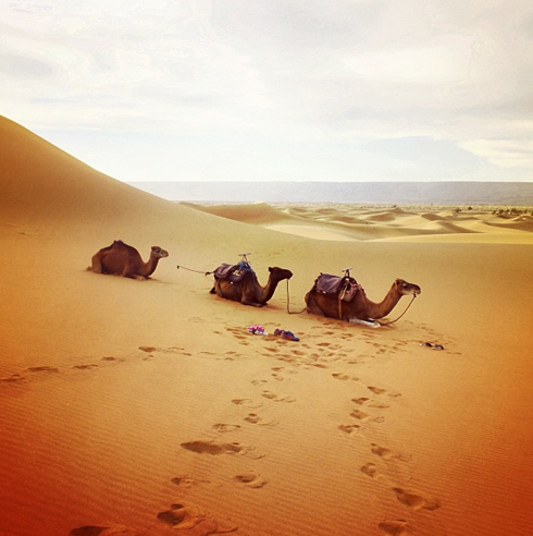 Sahara_11