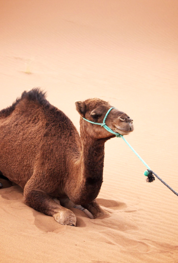 Morocco_09